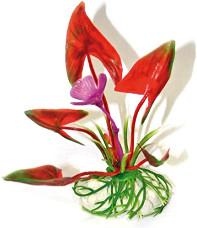 AMTRA LAGENANDRA BOTTOM plastmasinis augalas