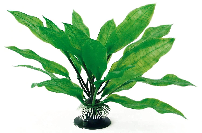 AMTRA ECHINODORUS Classic augalas MD 17cm