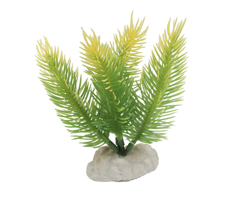 AMTRA FERN BOTTOM augalas mažas