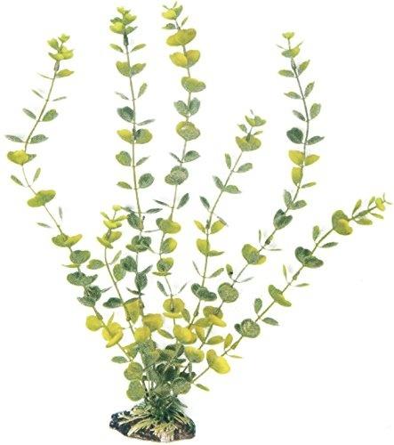 AMTRA HYDROCOTYLE augalas mažas 13cm