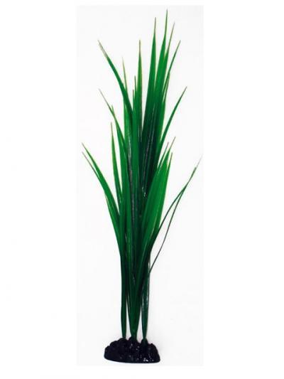 AMTRA BAMBOO augalas labai didelis 33cm