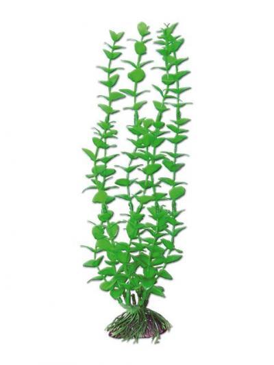 AMTRA ROTALA augalas mažas 13cm