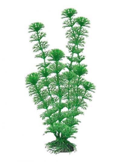 AMTRA CABOMBA augalas labai didelis 33cm